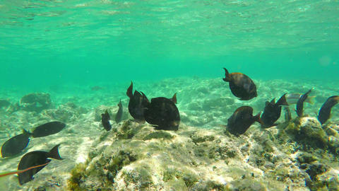 Flock of Various Tropical Sea Fishes Underwater Footage