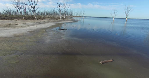 Aerial Drone Scene Of Beach With Dead Big Trees. Camera Travels Along The Shore stock footage