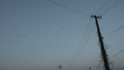 MIGRATING BIRDS Footage