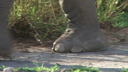 Perfect Footsteps Of Elephant At Close Range stock footage