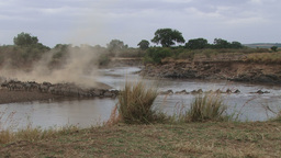 Wildebeests crossing the river on a dusty river bed Footage