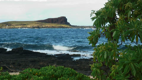 Hawaiian shoreline with volcanic rock and a tree in the foreground Footage