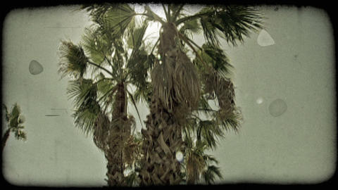 Low Angle Footage Of Palm Trees Growing In Road Median. Vintage Stylized Video C stock footage