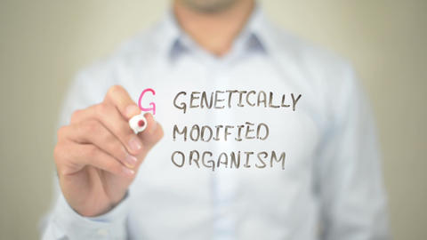 gmo genetically modified organism , Man writing on transparent screen Footage