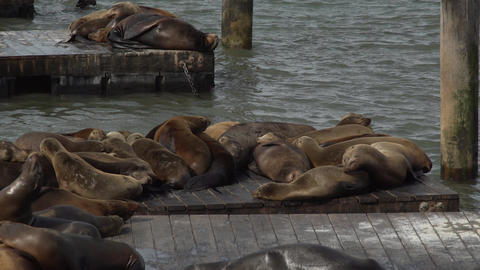 Sea lions sleeping on the pier Footage