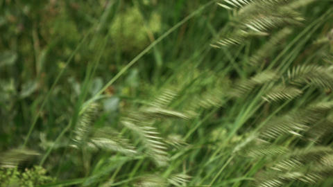 Grass Sways In The Wind 4K stock footage