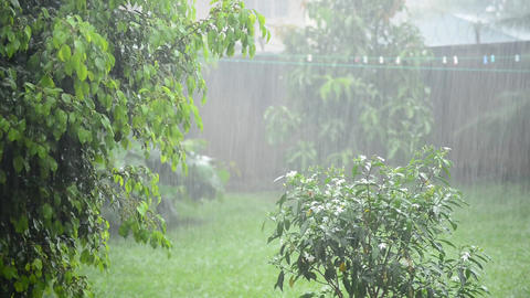 Heavy rain in the garden Footage