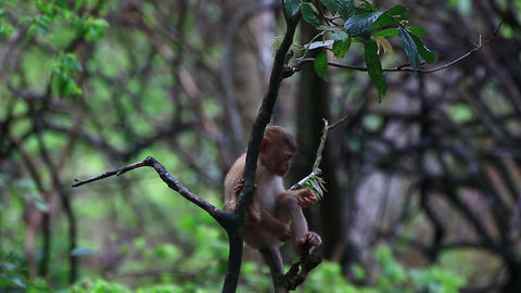 Monkey Family Sitting On The Tree stock footage
