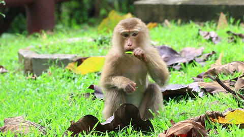 Young Monkey Sitting On The Ground stock footage