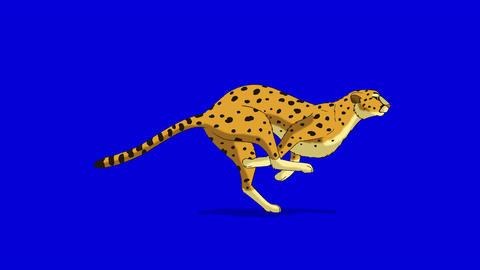 Running Cheetah. Classic Disney Style Animation On Chroma Key Blue Screen stock footage