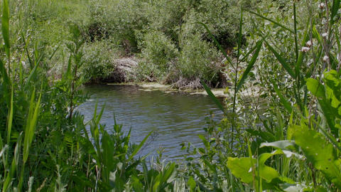 Landscape On Small River stock footage