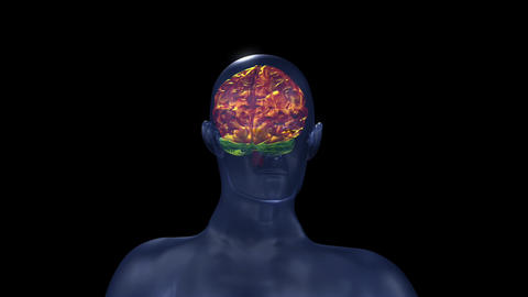 Human Brain Structure stock footage