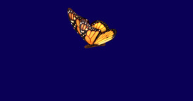 Monarch Butterfly Flapping Wings In Slow Motion Movements , Flight stock footage