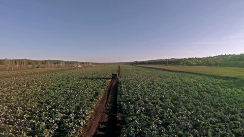 Harvesting In A Field. Big Harvest stock footage