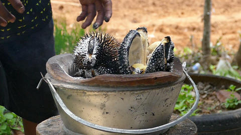 Durian Bbq stock footage