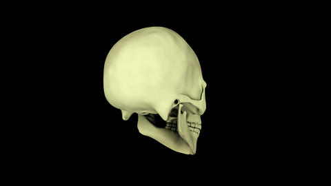 Rotating visualization of human skull Animation