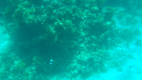 Sea Bottom With Corals stock footage