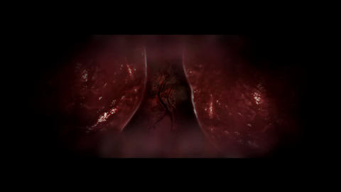 Heart And Lungs Iside The Chest stock footage