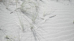 Grass And Sand stock footage