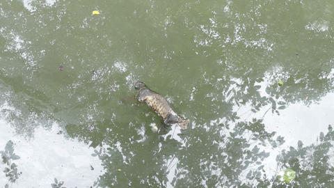 Cat Dead In The Canal 2 stock footage