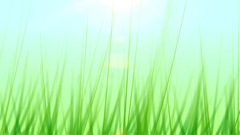 BG GRASS 001 25fps stock footage