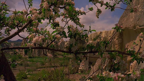 Cappadocia In Turkey. Blooming Tree And Mountains stock footage