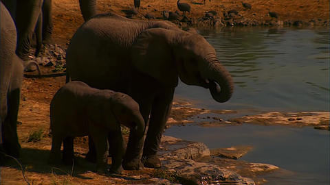 Mother And Baby Elephant At The Lake stock footage