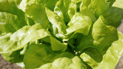 Green Salad stock footage