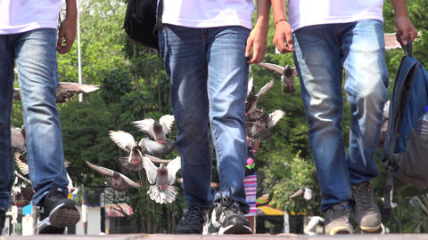 Boys Walking With Flock Of Pigeons Footage