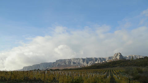 Vineyard On A Background Of Mountains And Sky stock footage
