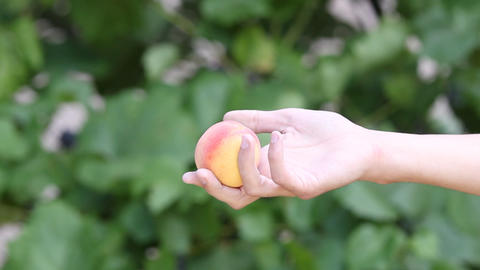 Man giving peach to a woman Footage