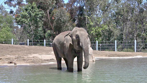 Elephant In Water In The Zoo stock footage