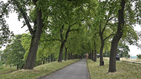 Walking Path In The Royal Park, Oslo stock footage