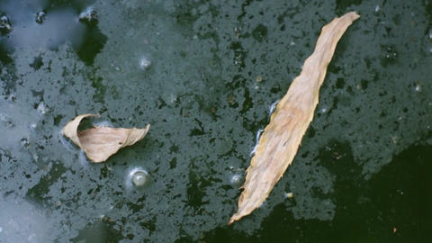 Dry Leaves Floating On Water stock footage