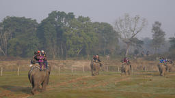 Tourists On Elephant On Safari Tour,Chitwan,National Park,Nepal stock footage