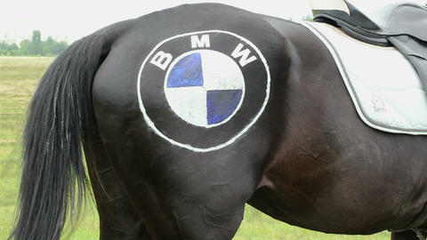 Back Part Of Horse Wagging The Tail With Logo On Its Hip stock footage