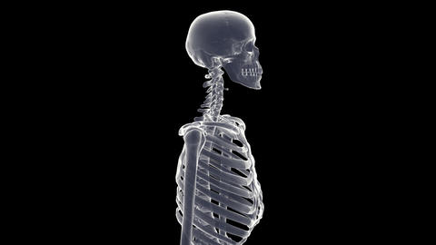 skeleton xray Animation