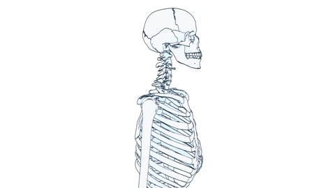 Skeleton Draw stock footage