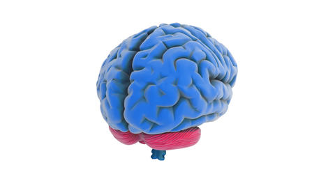 Brain Model stock footage