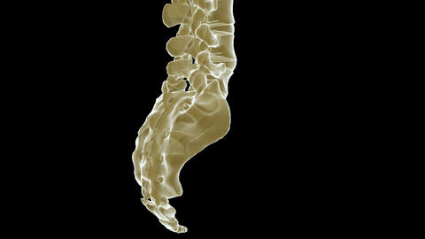 Spine Xray stock footage