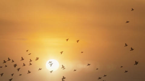 Sunset Birds with glow Animation