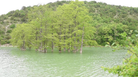 Cypress swamp growing out of the water on the background of mountains overgrown  Footage