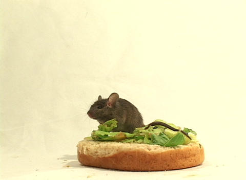 Medium Shot Of A Mouse Possibly Becoming A Snack While Having A Snack stock footage