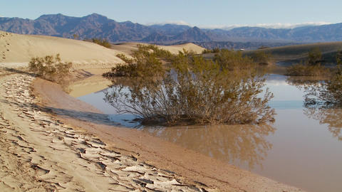 An Oasis In Death Valley National Park Offers A Refuge From The Heat stock footage
