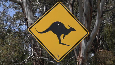 A Kangaroo Cross Road Sign Stand Near Trees stock footage