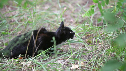 Black Cat Jumping In The Grass, Slow Motion stock footage