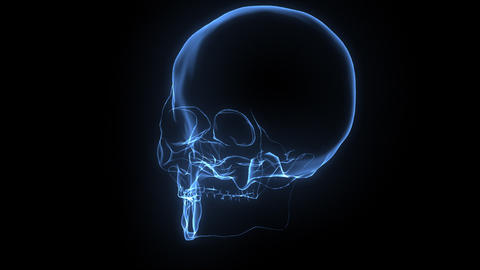 X-Ray Skull Animation