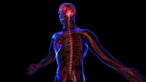 Nervous System stock footage