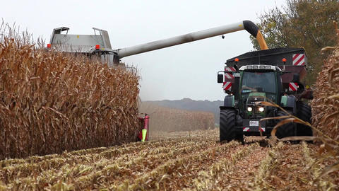 Thresher Harvesting Maize For Silage stock footage