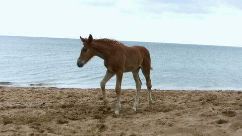 Foal jumping on the beach Footage